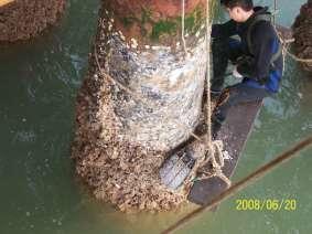 水面水工清理2